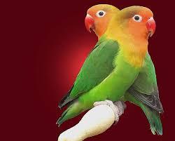 عصافيرررر images?q=tbn:ANd9GcS