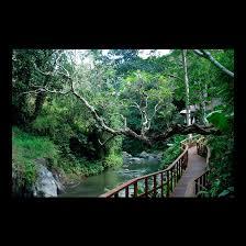 maya ubud resort and spa denton corker marshall architecture