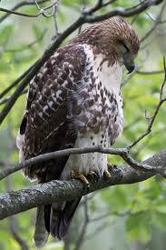 do birds sleep cornell lab of ornithology birdsleuth k 12