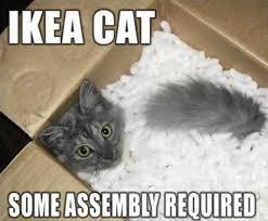 50 cat memes grab bag edition cattime