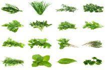 les herbes de cuisine herbes recette herbes idées recettes autour d herbes