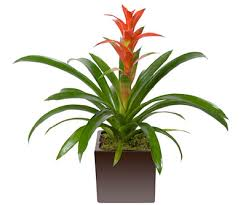 Plants For Office Indoor Office Plants The Benefits Of Plants At Work Big Apple