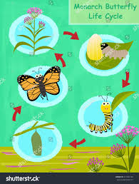 monarch butterfly life cycle colorful cartoon stock vector
