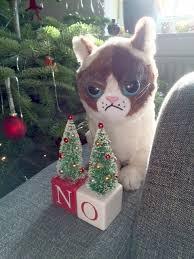 spam o rama grumpy cat i m helping statics show