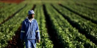 lancement des parcours de compétences en agriculture sur le nepad de nouvelles stratégies pour transformer l agriculture