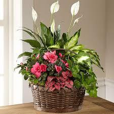 sympathy plants sympathy funerals caseys outdoor solutions florist