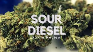 buy edible cannabis online buy top quality marijuana cannabis edibles cannabis