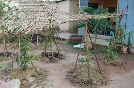 family care cambodia