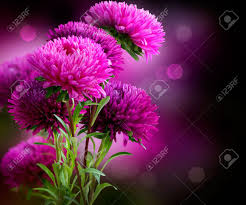 aster autumn flowers art design stock photo picture and royalty