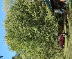 american elm bird buffet the nature of delaware