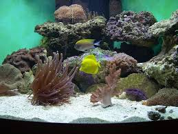 Aquascape Reef Aquascaping Live Rocks In Your Saltwater Aquarium