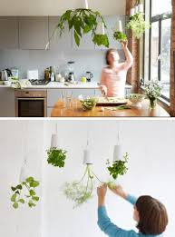 plants indoor plant hanging ideas design indoor hanging plant