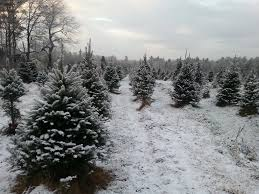 cut your own christmas tree farms in maine mainetoday