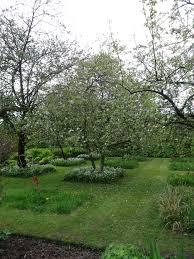 best 25 orchards ideas on pinterest planting fruit trees apple