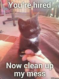 Bad Ass Memes - pics photos cat memescat memes 25 cute and cat memes badass memes