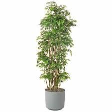 lights stylish indoor hanging plants low light indoor plant