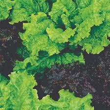 do vegetables like shade pohlmans phone 07 5462 0477