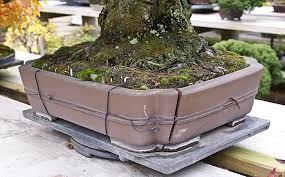 pot bonsai design preparing for bonsai winter protection u2013 valavanis bonsai blog