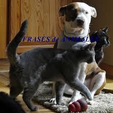imagenes de gatitos sin frases las 100 mejores frases de animales y mascotas lifeder