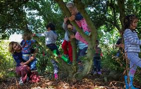 about us tiny trees affordable high quality preschool at 7