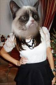 Grumpy Cat Meme I Had Fun Once - aa