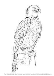 learn how to draw bald eagle full body bird of prey step by step