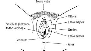 hair vagaina photos ingrown hair on vagina lips labia minora majora bump prevent