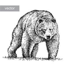 11 047 bear head stock illustrations cliparts and royalty free