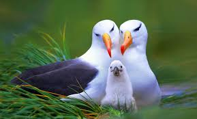 bird wallpapers wildlife birds wallpapers for kids pet birds pictures hd my