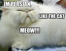 Persian Cat Meme - i pinimg com originals af e5 4c afe54c7d6169ae6b2e