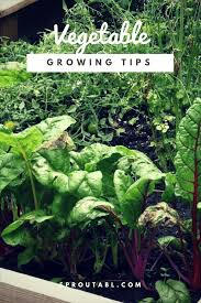 How To Grow Vegetables by Vegetables