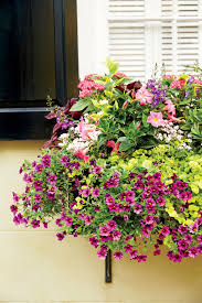 Plants For Winter Window Boxes - add charm with window boxes southern living