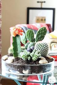 Cactus Garden Ideas Cactus Garden Ideas Hydraz Club