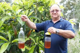 mediterranean fruit fly agriculture and food