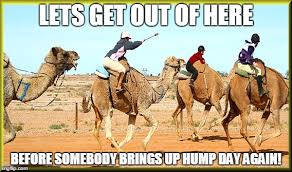 Camel Memes - lets get out of here before somebody brings up hump da again funny