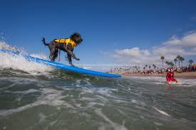 halloween city imperial beach surf dog events