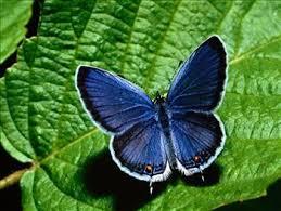 MILANO MARITTIMA casa delle farfalle