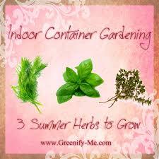 Indoor Container Gardening - indoor container gardening 3 summer herbs to grow greenify me