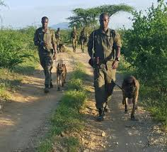 belgian sheepdog rescue trust facebook meet the dogs that protect elephants rhinos from poachers in