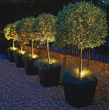 Best Outdoor Lighting Ideas Images On Pinterest Garden Ideas - Backyard lighting design