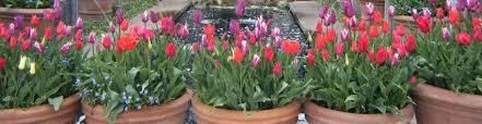 how to get low maintenance planting for pots u2013 plantplots