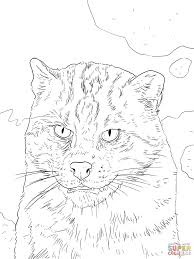 fishing cat portrait coloring page free printable coloring pages