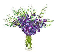 Blue Orchids Amazon Com Eflowerwholesale Fresh Cut Flowers Dendrobium Blue