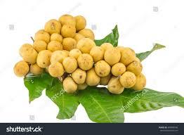 longkong langsat lanzones fruit on white stock photo 305840546