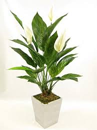 peace plant 65cm potted artificial silk peace spathiphyllum plant