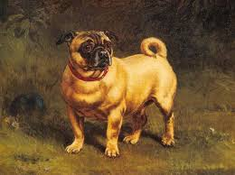 affenpinscher brown discussion is it unethical to breed some breeds dogs