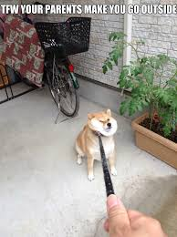Meme Shiba Inu - shiba inu memes best collection of funny shiba inu pictures