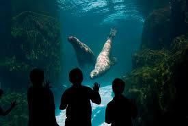 Oregon Zoo Zoo Lights by Steller Sea Lion Oregon Zoo