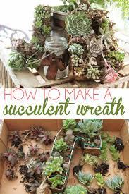 117 best succulents images on pinterest plants succulents and