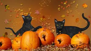 halloween cartoon wallpaper halloween cartoon seamless texture with cats and crows stock